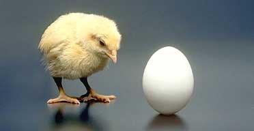http://gurugilbert.com/wp-content/chicken192.jpg